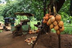 Soporte del coco del rey en Sri Lanka rural imagenes de archivo
