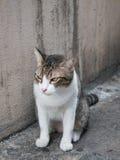 Soporte del gato Imagen de archivo