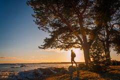 Soporte del hombre joven debajo del árbol durante puesta del sol en invierno en Estonia del sur Imagen de archivo libre de regalías