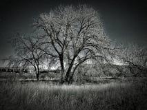 Soporte del invierno de árboles en el parque de estado del pueblo del lago fotos de archivo libres de regalías