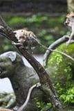 Soporte del mono en la lluvia Fotos de archivo libres de regalías