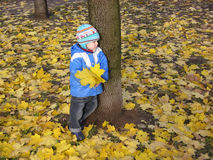 Soporte del niño en hojas de otoño Foto de archivo