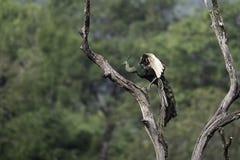 Soporte del pavo real en tocón en naturaleza Foto de archivo