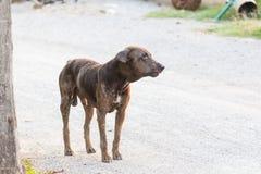 Soporte del perro de la sarna en la tierra Imagenes de archivo