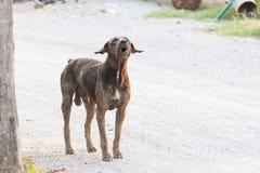 Soporte del perro de la sarna en la tierra Foto de archivo