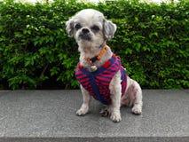 Soporte del perro en el borde de piedra foto de archivo libre de regalías