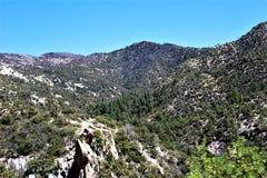Soporte Lemmon, Tucson, Arizona, Estados Unidos imagen de archivo