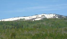 Soporte Naomi Wilderness - bosque del Estado del escondrijo Fotografía de archivo libre de regalías