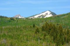 Soporte Naomi Wilderness - bosque del Estado del escondrijo Imágenes de archivo libres de regalías