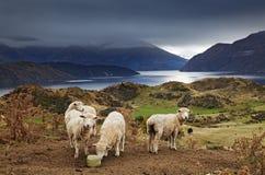 Soporte Roys, Wanaka, Nueva Zelanda Imagenes de archivo