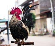 Soporte tailandés del pollo en la madera Fotografía de archivo