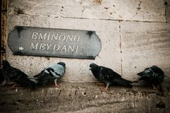 Soportes de las palomas en la pared de piedra en pavo imágenes de archivo libres de regalías