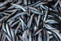 Soportes de pescados frescos Fotografía de archivo libre de regalías