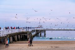 The Sopot Pier is the longest wooden pier in Europe. People walk and feed the swans on the beach in Sopot, Poland royalty free stock photography