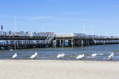 Group of swans on the sandy beach, close to the Sopot pier, Sopot, Poland. SOPOT, POLAND - JUNE 6, 2018: Group of swans on the sandy beach, close to the Sopot stock image