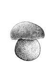 Sopp plocka svamp illustrationen, teckningen, gravyr, linjen konst Vektor Illustrationer