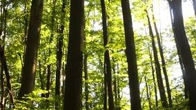 Soppa med shiitaken, miso och gräsplaner arkivfilmer