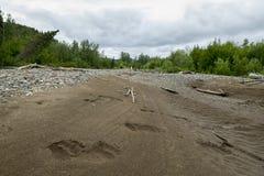 Sopporti le orme in sabbia sul letto di fiume d'Alasca Fotografia Stock Libera da Diritti