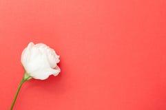 Soppressione la cartolina d'auguri di rosa Fotografie Stock Libere da Diritti