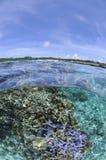 Sopra il colpo di sotto di bei coralli in Okinawa immagini stock