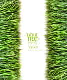 Sopra il punto di vista di erba su bianco Immagini Stock