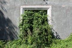 Sopra la casa abbandonata di cento anni con la finestra rotta in pieno della pianta del cingolo crescere da ha circondato con le  fotografia stock libera da diritti