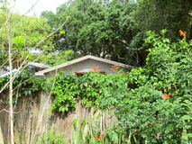 Sopra la parete del giardino Immagini Stock Libere da Diritti