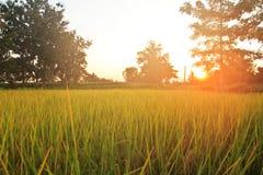 Sopra la piantagione della risaia nell'alba di mattina Immagini Stock Libere da Diritti