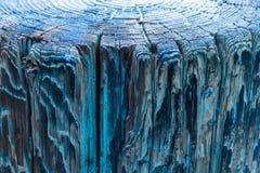 Sopra la vista degli anelli di albero e la vista laterale del pilastro di legno stagionato, una struttura d'annata di pittura sbi immagine stock