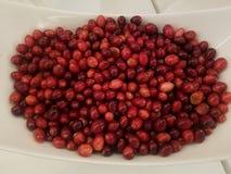 Sopra la vista dei mirtilli rossi freschi in ciotola bianca, ottenga i vostri antiossidanti immagine stock