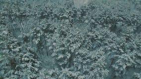 Sopra la vista superiore sulle precipitazioni nevose della foresta di inverno sul metraggio aereo del fuco degli alberi archivi video