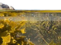 Sopra-sotto la spaccatura sparata di acqua libera in raggruppamento di marea fotografie stock libere da diritti