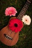 Soprano d'ukulélé décoré des fleurs de gerbera image libre de droits