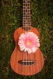Soprano d'ukulélé décoré des fleurs de gerbera photo libre de droits