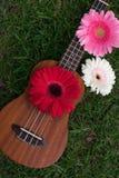 Soprano d'ukulélé décoré des fleurs de gerbera photos libres de droits