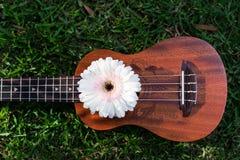 Soprano d'ukulélé décoré des fleurs de gerbera images libres de droits