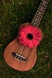 Soprano d'ukulélé décoré des fleurs de gerbera image stock