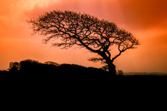 Sopravvivenza del vento Fotografia Stock