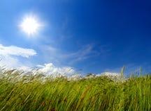 Sopro da grama e do vento imagem de stock royalty free