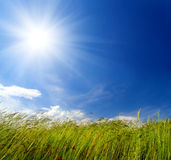 Sopro da grama e do vento fotografia de stock royalty free
