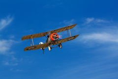 Sopwith valp Royaltyfria Foton