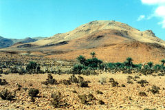 Soqotra-Insel Lizenzfreies Stockbild