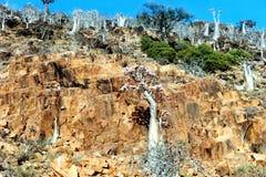 Soqotra-Insel Lizenzfreie Stockfotos