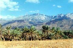 Soqotra island. In Yemen, Indian Ocean stock photos