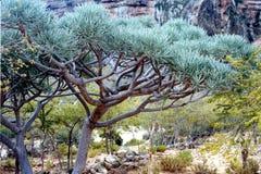 Soqotra island. In Yemen, Indian Ocean royalty free stock photos