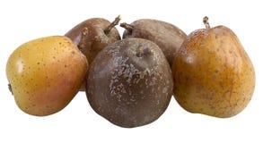Sorb Cutout. Rowan Berry Fruit, Sorbus Domestica Stock Images