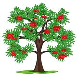 Sorba dell'albero e bacche mature sul ramo illustrazione di stock