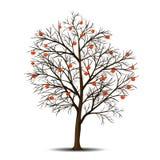 Sorba e bacche dell'albero senza foglie Fotografia Stock Libera da Diritti