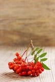 Sorba o ashberry en un tablero de madera Foto de archivo libre de regalías