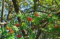 Sorba su un ramo verde Fotografia Stock Libera da Diritti